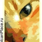 Камчатский питомник кошек породы мейн кун «VOLCANPLACE» группа в Моем Мире.