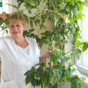 Елена Ткаченко on My World.